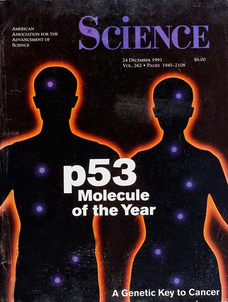 Cancer. p53, guardian of the genome.